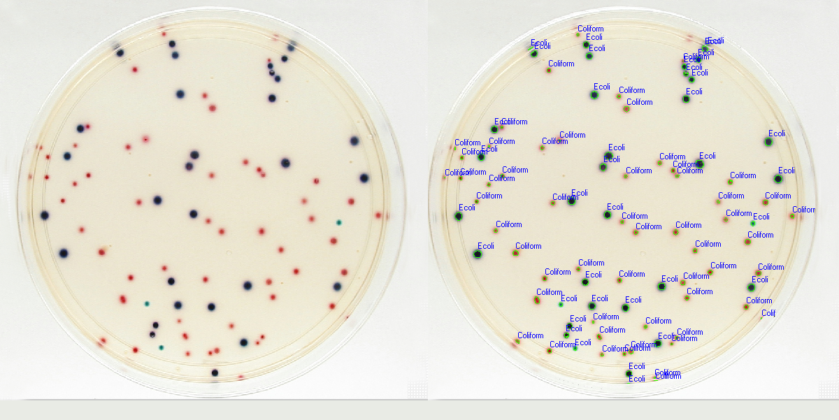 Petrilyzer Color Analysis. Automatic identification and color classification of colonies on a media plate. E.coli and coliform colonies are determined by their color